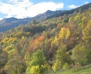 Prachtige kleuren in de herfst