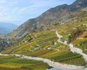 Herfst wijnbouw Les Quatre Vallées