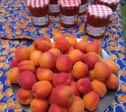 abrikozenjam maken